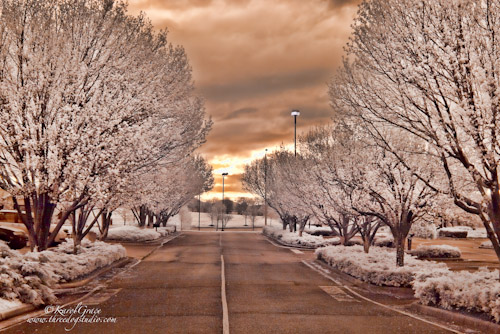 Rows of Trees in Infrared