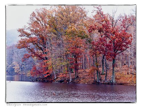 Fall trees in fog