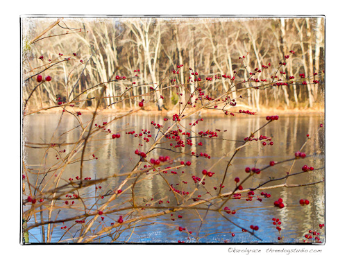 Red berries on the lake shore