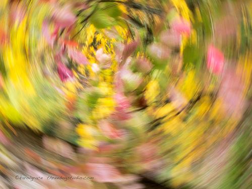 Camera motion blur